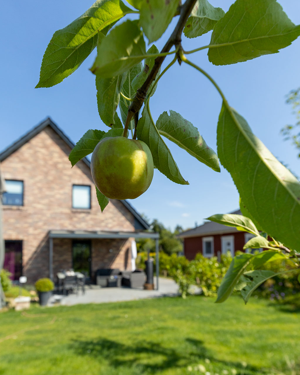 Apfel im eigenen Garten